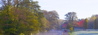 Riverside Park featuring mist or fog, a park and autumn leaves