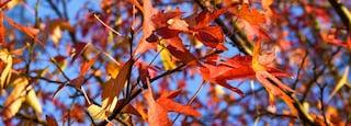 Riverside Park featuring autumn leaves