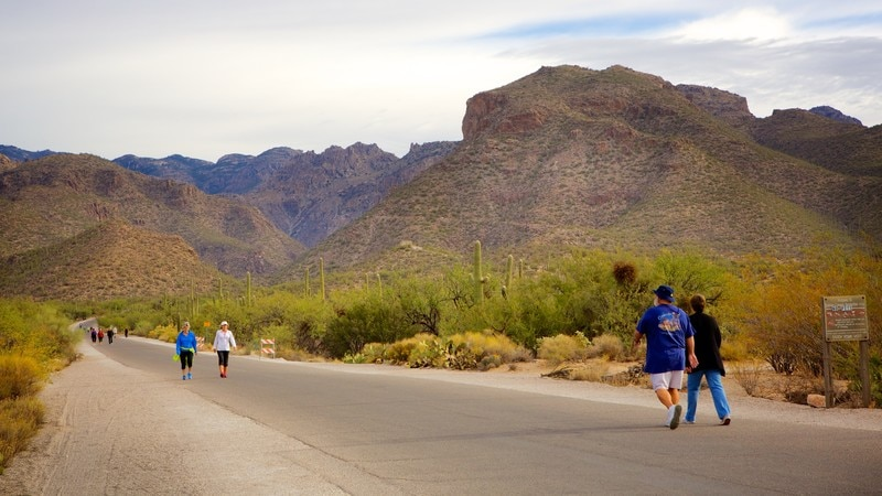 Sabino Canyon which includes tranquil scenes, hiking or walking and a gorge or canyon