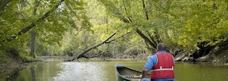 Canton showing forest scenes, kayaking or canoeing and a river or creek