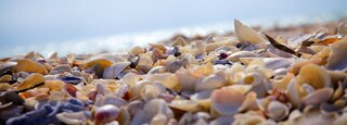 Barefoot Beach which includes a pebble beach