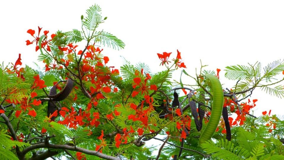 El Ocotal showing flowers and wildflowers
