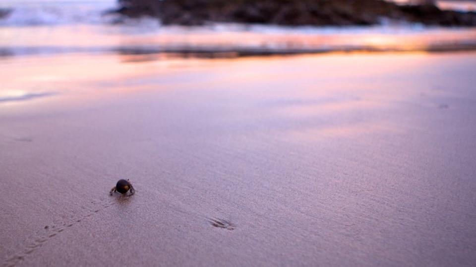 Flamingo Beach which includes a sandy beach and animals