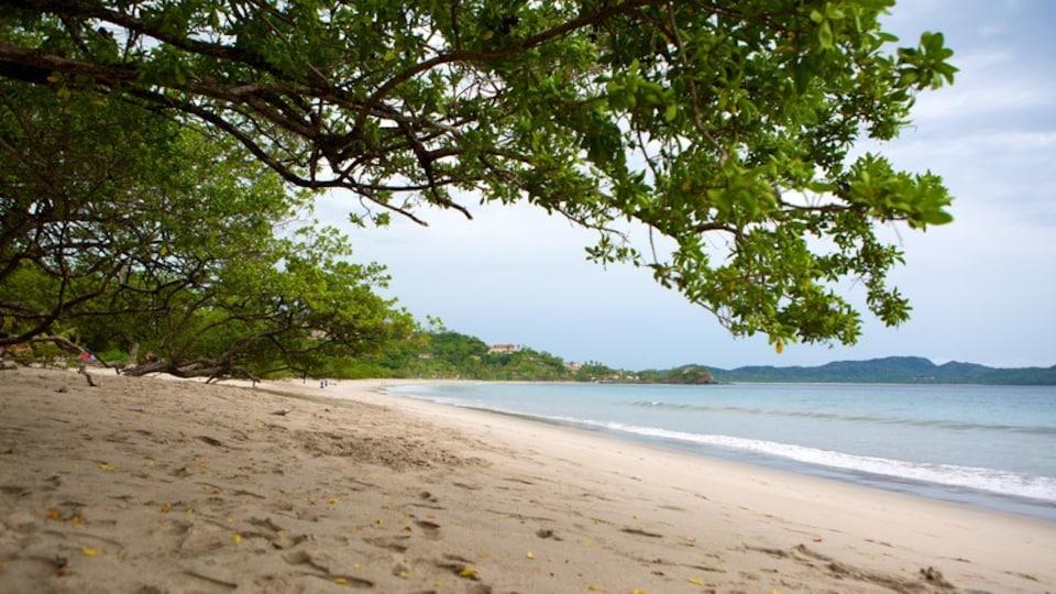 Flamingo Beach which includes a sandy beach