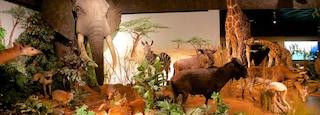 Geneva Museum of Natural History showing interior views