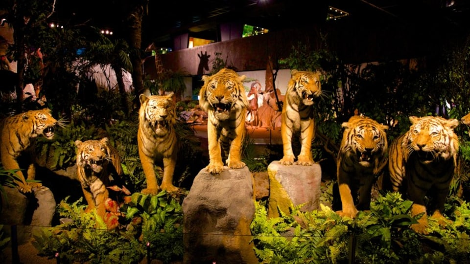 Geneva Museum of Natural History featuring interior views