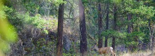 Scenic Canyon Regional Park which includes animals and forest scenes