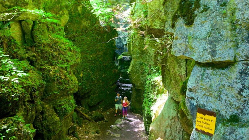 Collingwood Scenic Caves which includes caving and caves