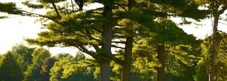Barrie Arboretum at Sunnidale Park which includes a park