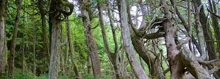 Wild Pacific Trail featuring forests