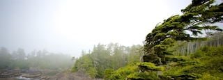 Wild Pacific Trail which includes mist or fog, forest scenes and general coastal views