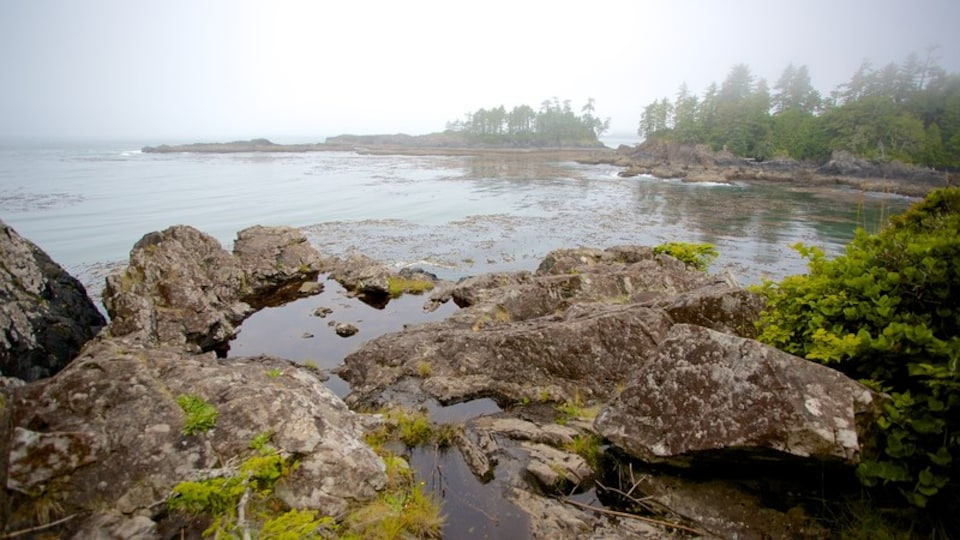 Wild Pacific Trail showing mist or fog and general coastal views