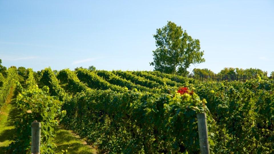 Sheldrake Point Winery showing farmland