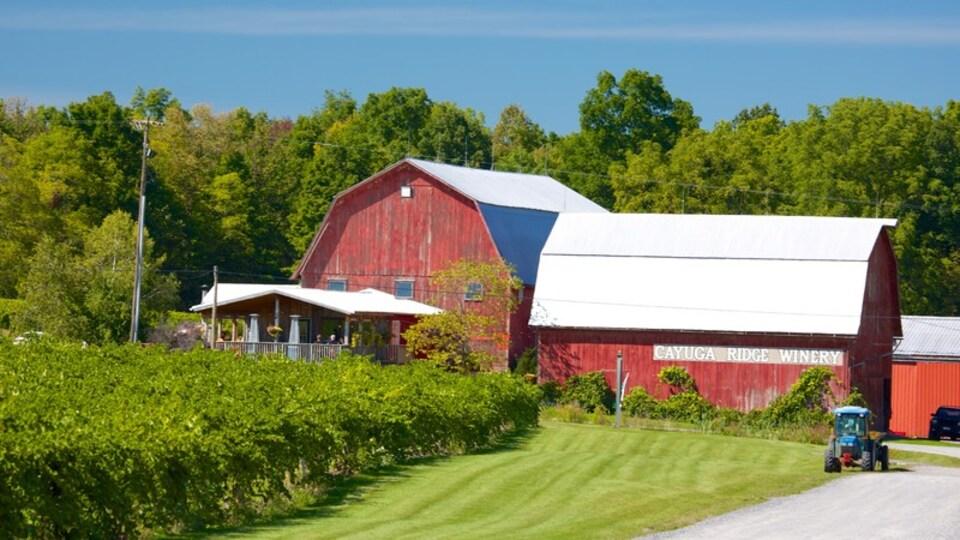 Seneca Falls showing farmland