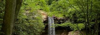 Uniontown featuring rainforest and a cascade
