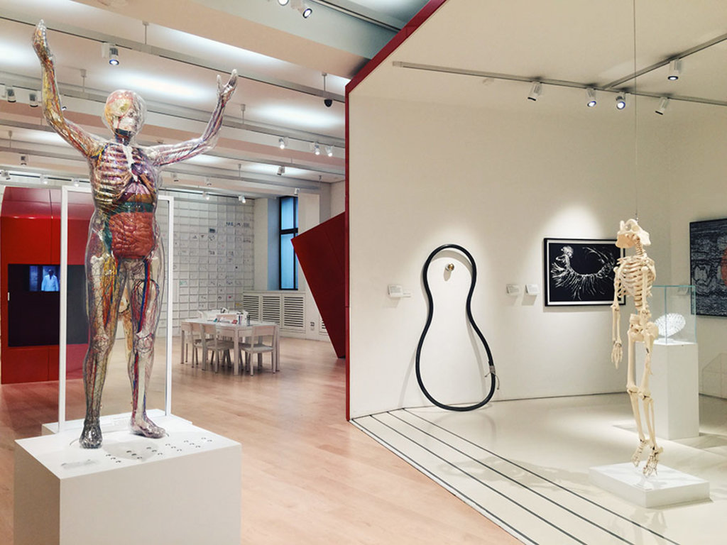 wellcome-collection-gallery