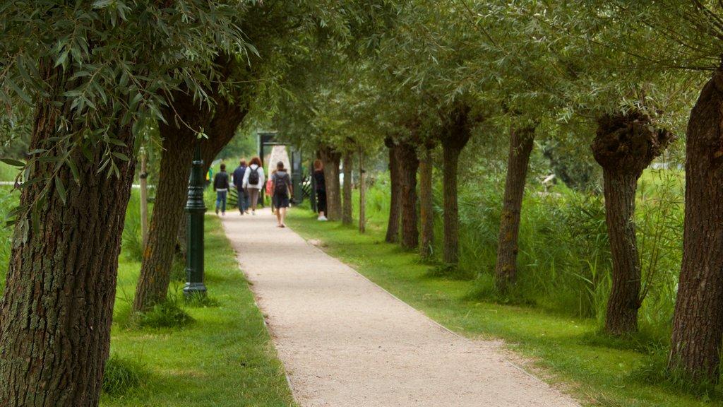 Zaanse Schans featuring a garden