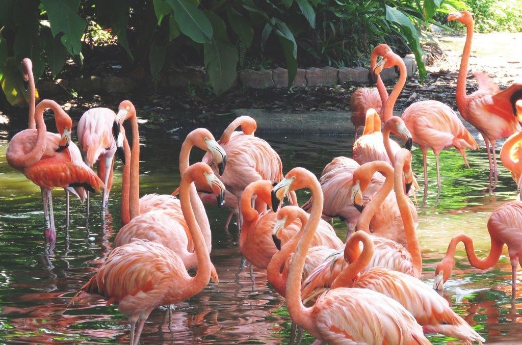 Flamingos im Zoo von Singapur