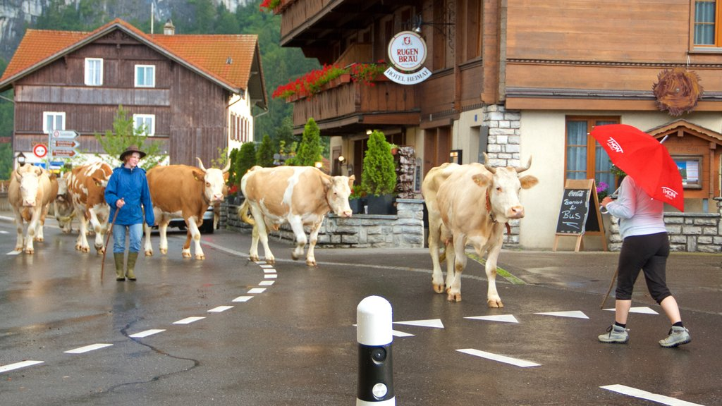 Wilderswil featuring a small town or village and land animals as well as an individual male