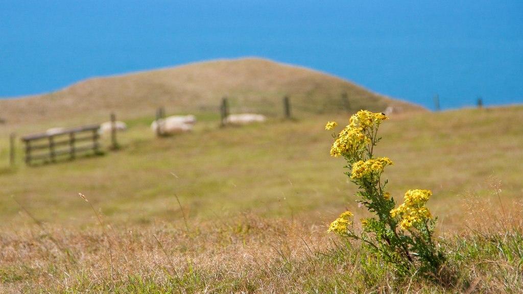 Dorset ofreciendo flores y escenas tranquilas