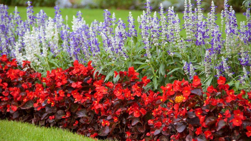 King\'s Lynn featuring flowers