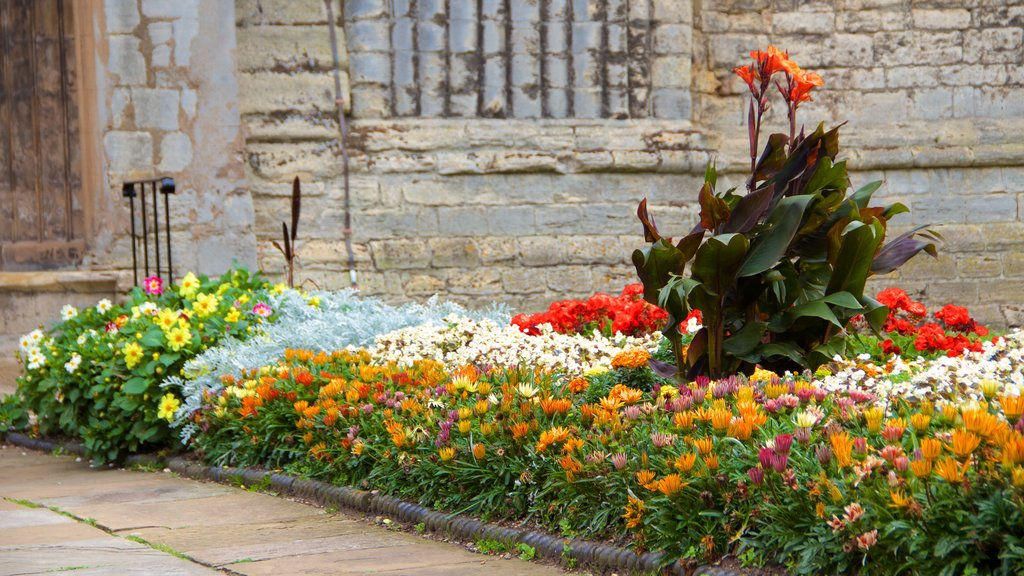 King\'s Lynn which includes flowers and a park