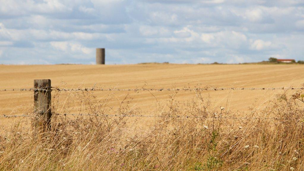 Stonehenge que incluye tierras de cultivo y escenas tranquilas