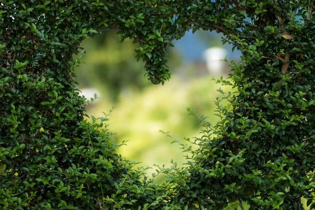 Herz aus Buchsbaum