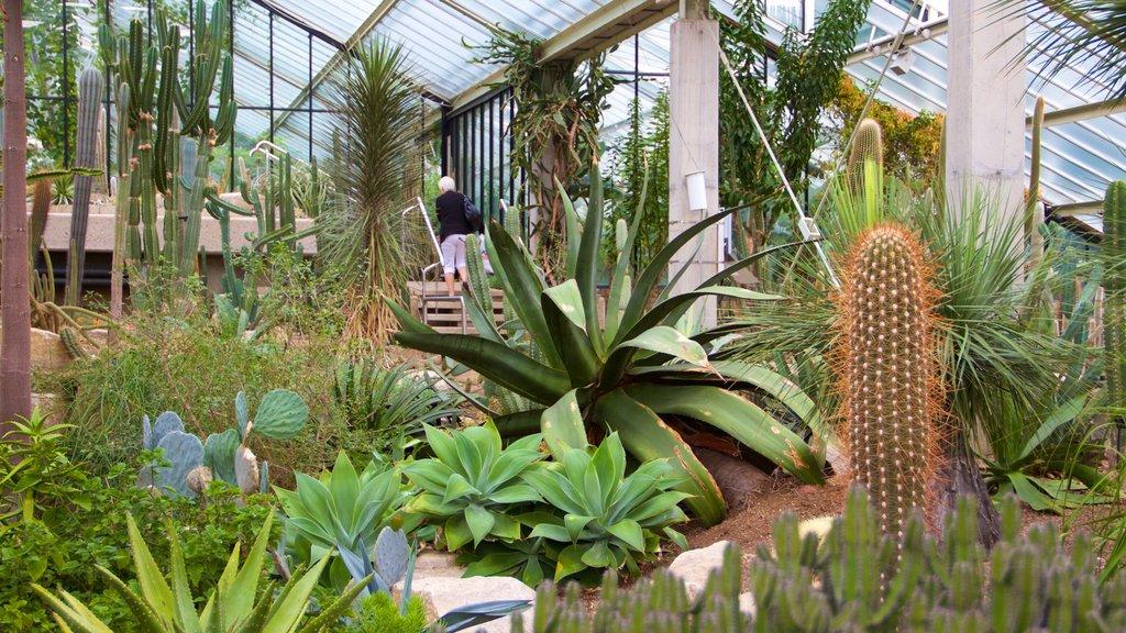Fotos de Parques y jardines: Ver imágenes de Jardín botánico real de Kew