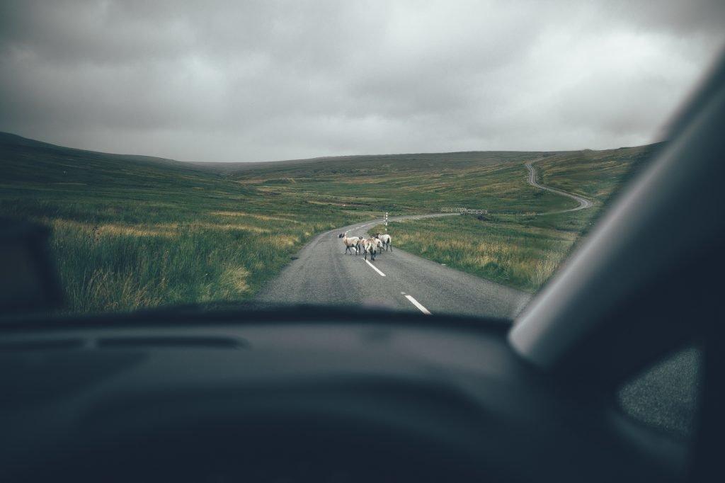Straße in den North Pennines, Schafe