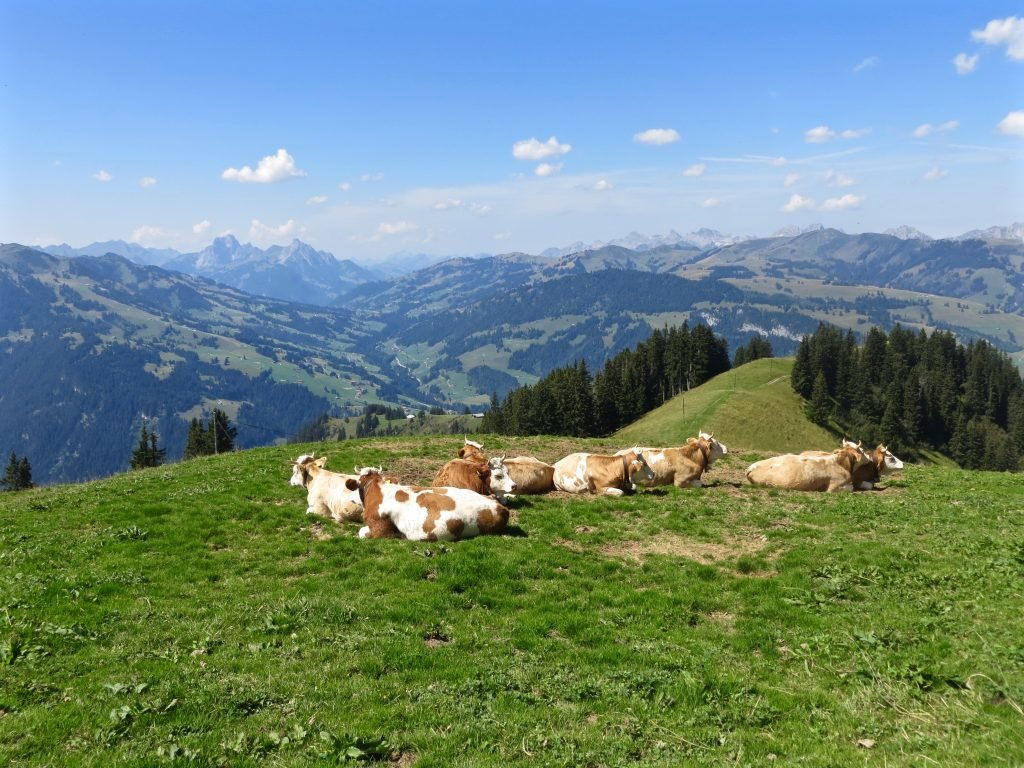 wandern-im-berner-oberland, Schweiz