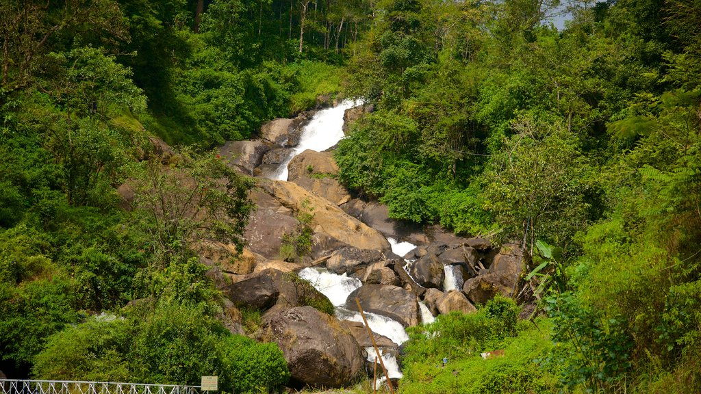 Munnar featuring forest scenes and a river or creek