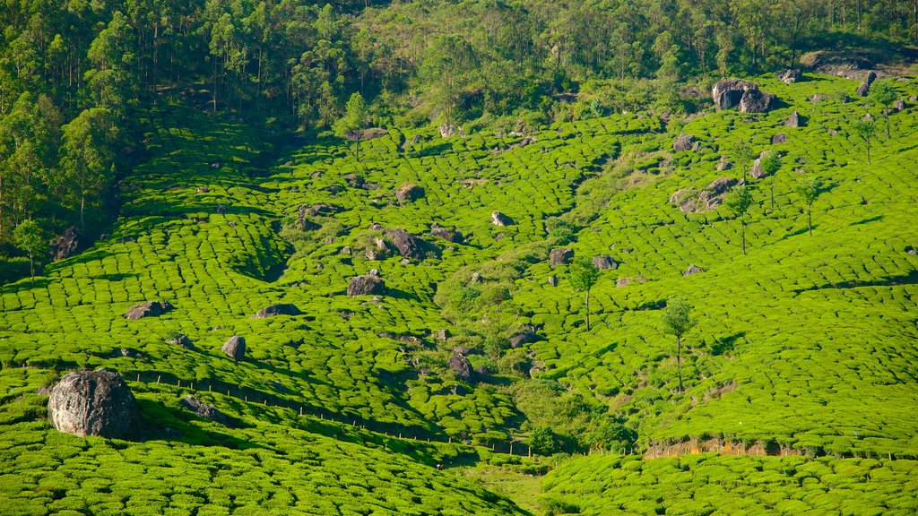 Idukki District which includes tranquil scenes