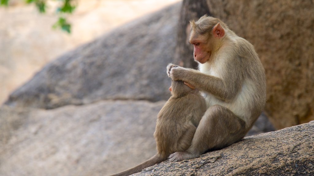 Chennai mostrando animales
