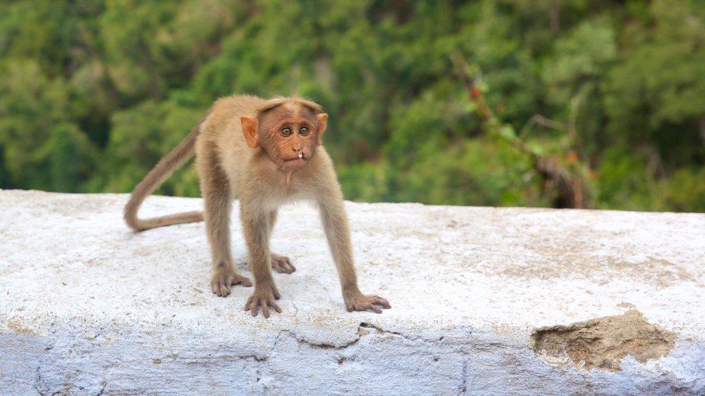 Kodaikanal featuring animals