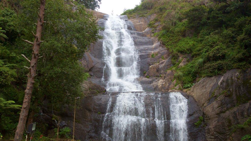 Silver Cascade featuring a waterfall