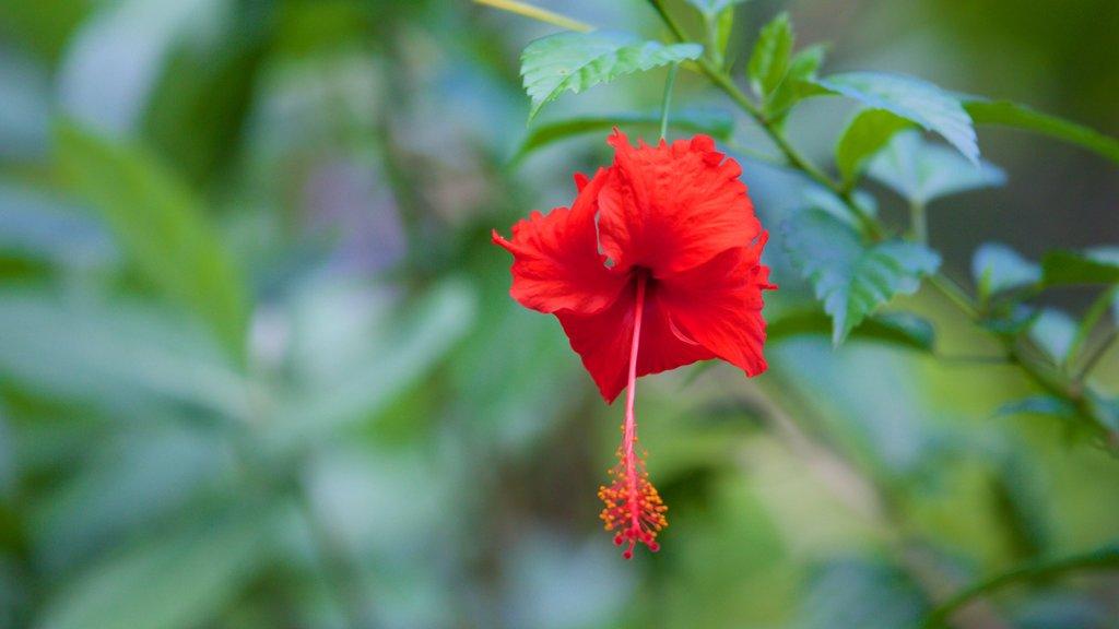 Kumarakom Bird Sanctuary which includes flowers