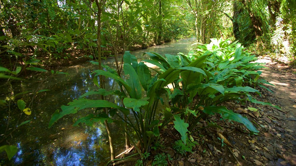 Kumarakom Bird Sanctuary featuring a river or creek