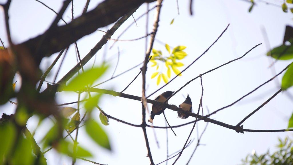 Kumarakom Bird Sanctuary which includes bird life