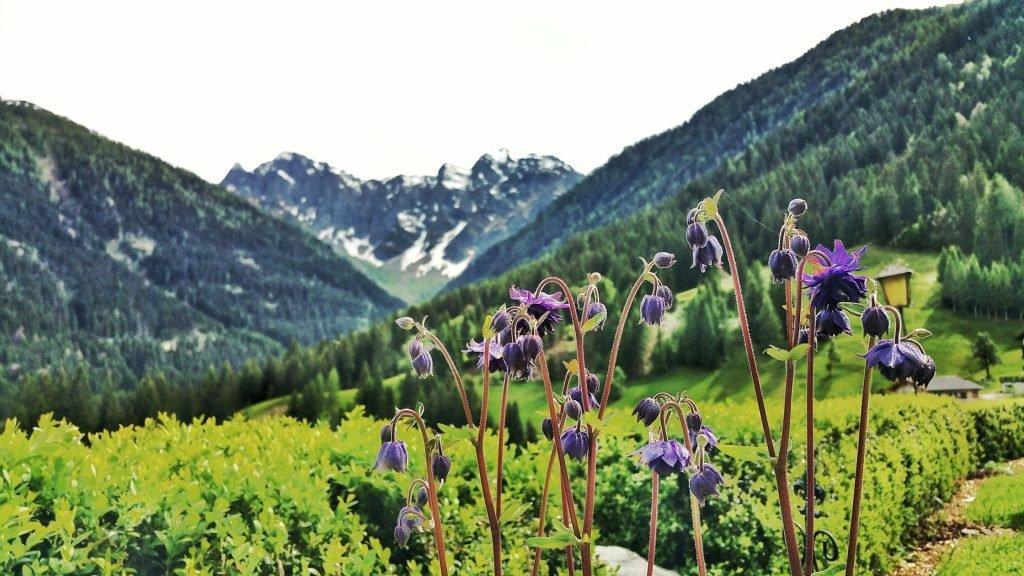 Aussicht Blumen Berge Kärnten Österrreich