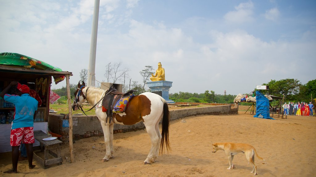 Mamallapuram Beach showing tranquil scenes, cuddly or friendly animals and animals