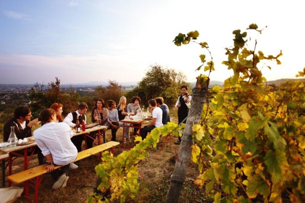 Weinanbaugebiet in Wien