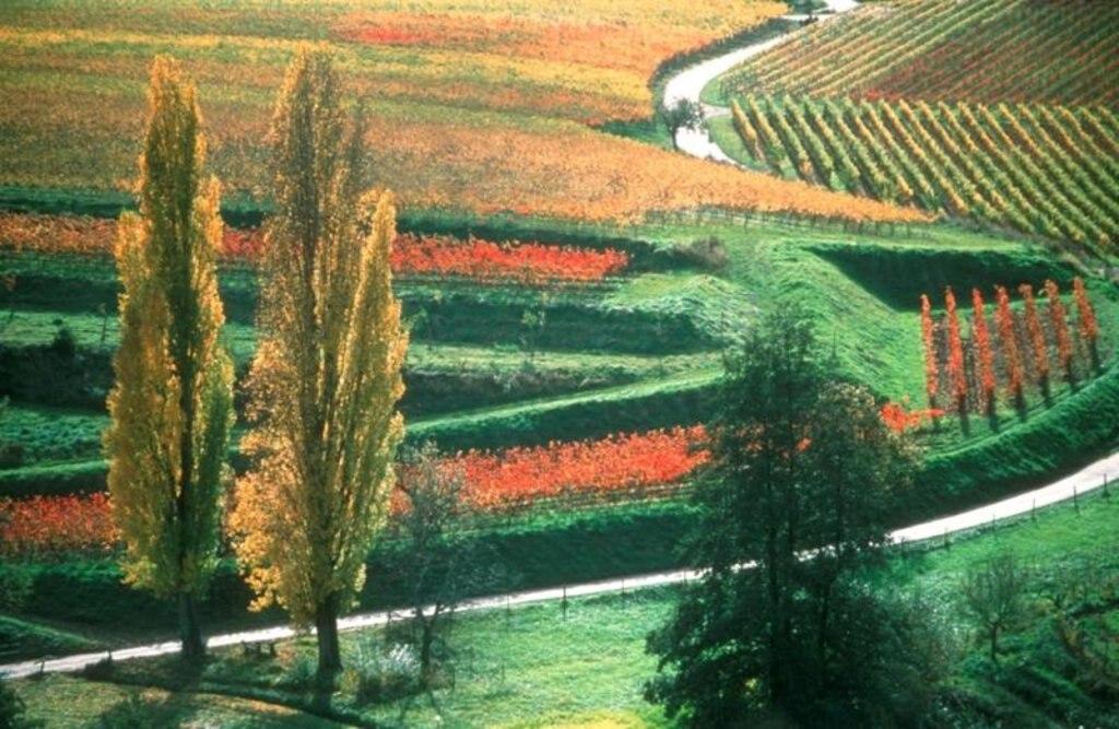 Landschaft_Herbst_Burrweiler1