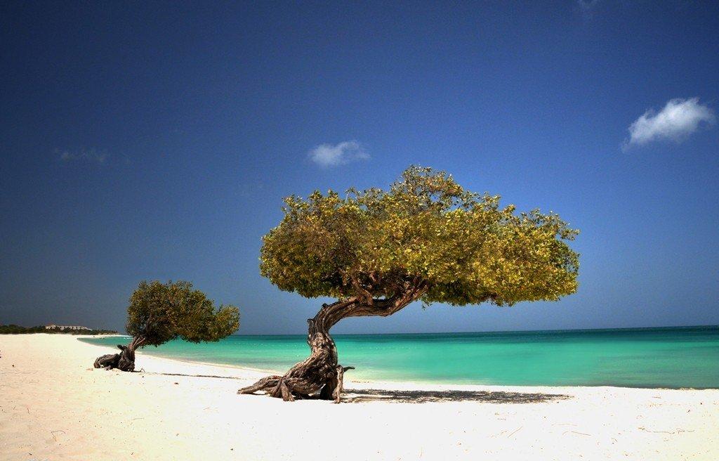 Divi Baum, Aruba