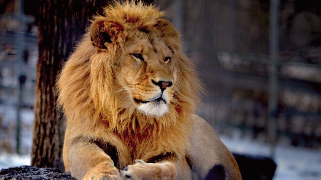 Utica mostrando animales del zoológico y animales peligrosos