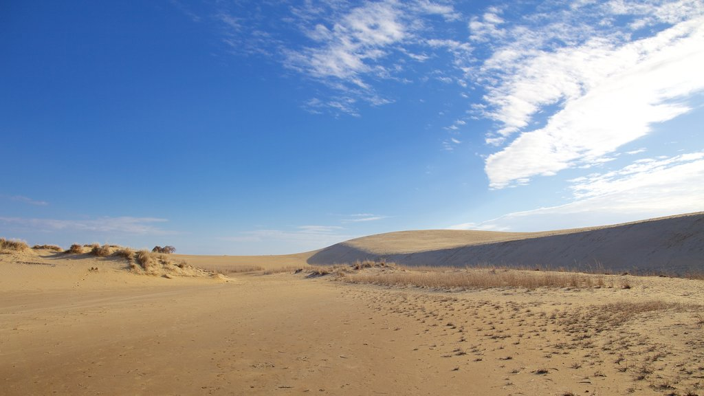 Jockey\'s Ridge State Park featuring tranquil scenes