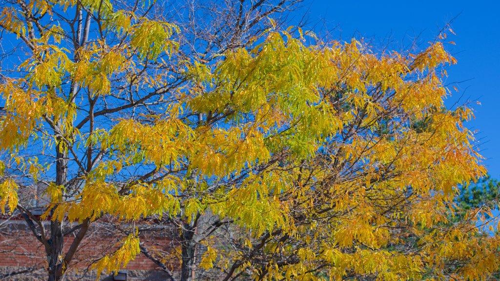 North Conway que incluye los colores del otoño