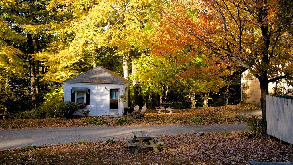 North Conway que incluye escenas forestales, una casa y los colores del otoño