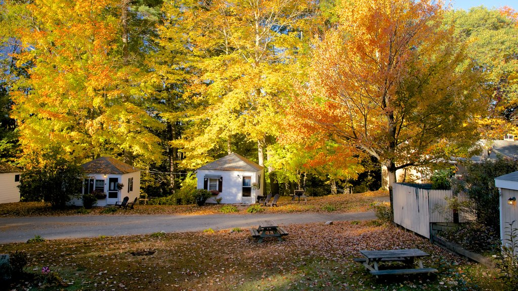 North Conway mostrando bosques, hojas de otoño y una casa