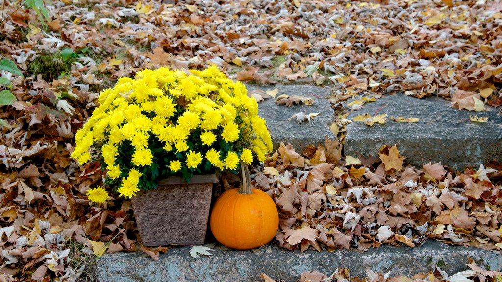 North Conway ofreciendo flores y los colores del otoño